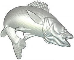 Zander fish file RLF for Artcam 9 and Aspire free vector art 3d model download for CNC wood carving
