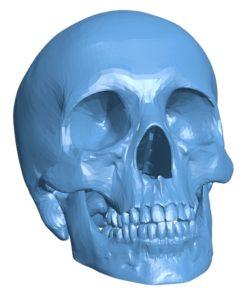 Human skull head B002972 file stl free download 3D Model for CNC and 3d printer