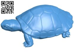 Realistic Turtle B007678 file stl free download 3D Model for CNC and 3d printer
