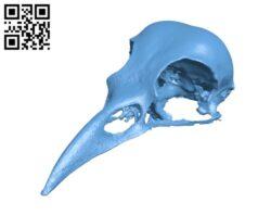 American Crow Skull H000383 file stl free download 3D Model for CNC and 3d printer