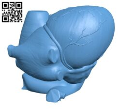 Anatomical Heart H000052 file stl free download 3D Model for CNC and 3d printer