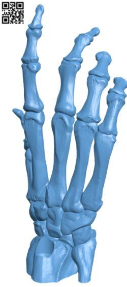 Bone Hand H000002 file stl free download 3D Model for CNC and 3d printer