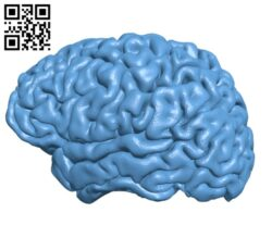Brain H000256 file stl free download 3D Model for CNC and 3d printer