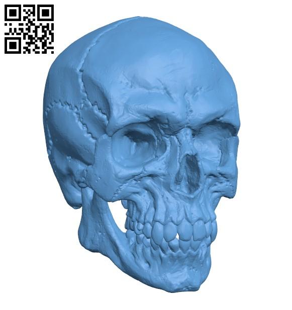 Detailed Skull H000094 file stl free download 3D Model for CNC and 3d printer