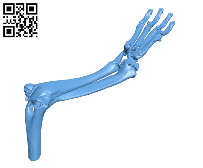 Front leg of a dog H000728 file stl free download 3D Model for CNC and 3d printer